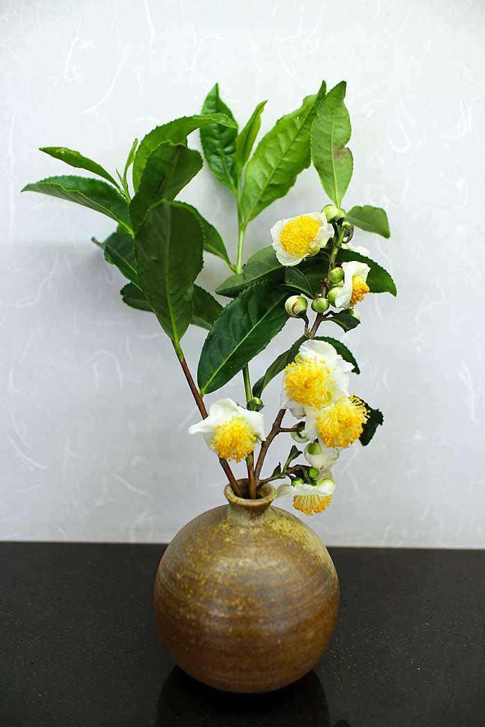 お茶の花を一輪挿しにさしてみま...